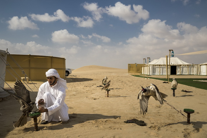 Brent Stirton, Getty Images per National Geographic, Falcons and the Arab Influence - Natura, Storie, 1° premio