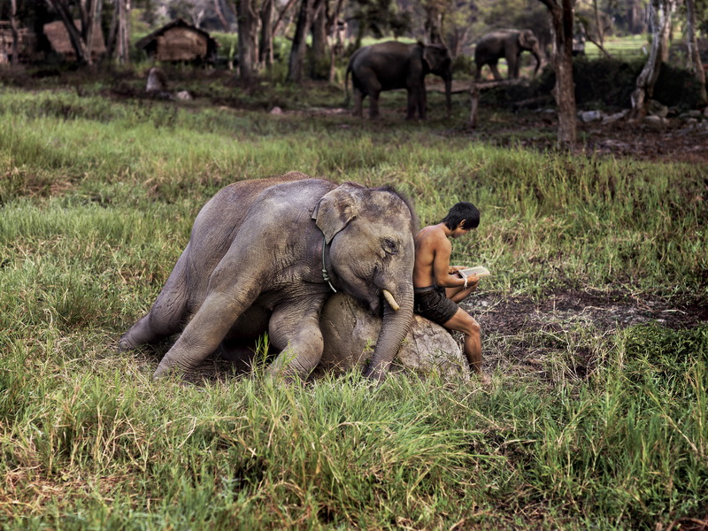 Mahout Reads with his Elephant. Chiang Mai, Thailand, 2010 © Steve McCurry